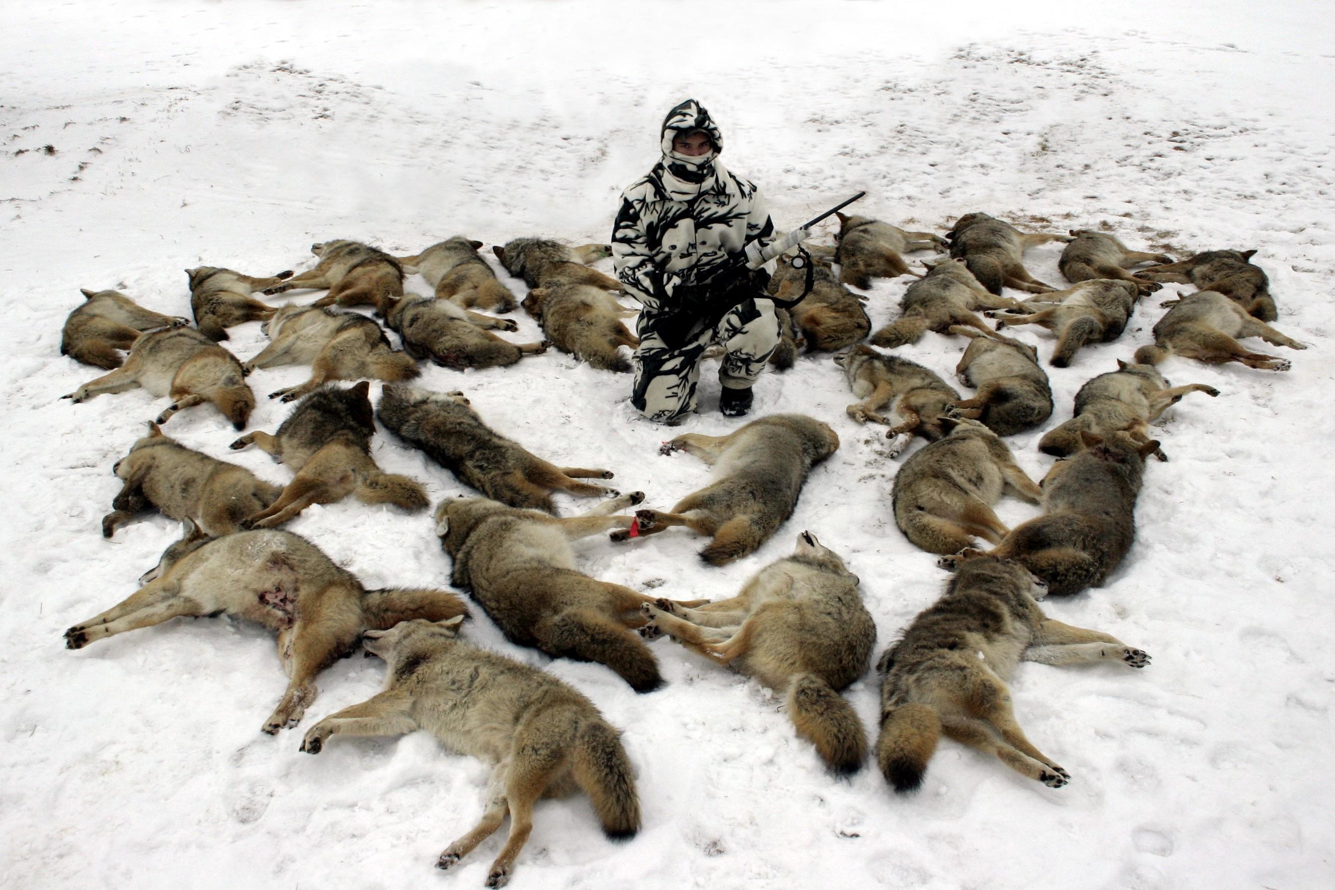 coyote-06-9-.jpg